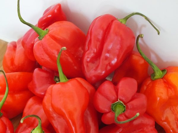 AFCAR Scotch Bonnet